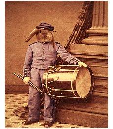 Coelho tambor