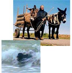 Burros e Cão de Água