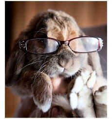 Coelho óculos