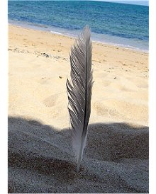 Pena de gaivota