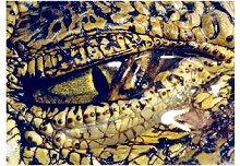 Lágrima de Crocodilo