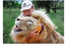 Escovador de leões