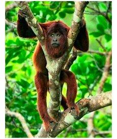 Macaco árvore