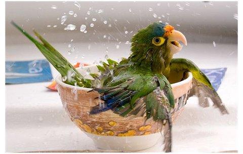 o banho do papagaio