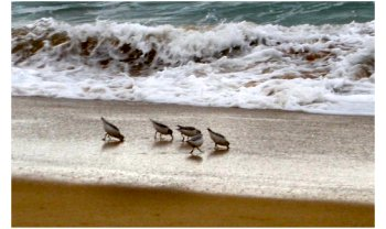 Pássaros praia