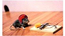Rato armadilha